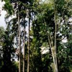 f2002_kfbludnik05